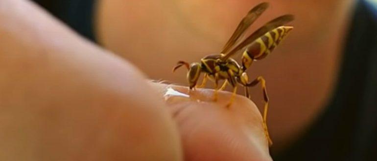 Фото: Укусы насекомых - оса
